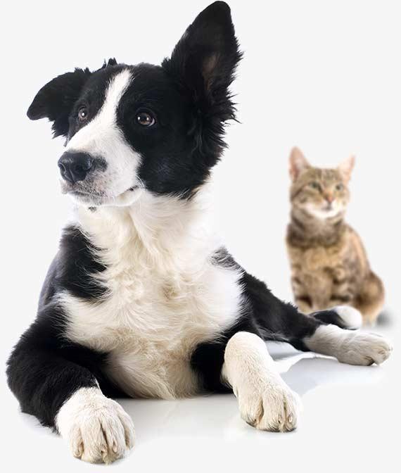 Residencia canina Cordoba